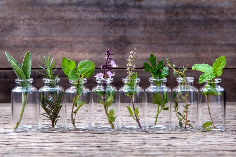 growing lotus without soil