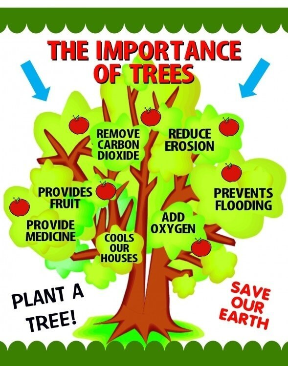 Importance of plants in our life