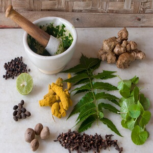 Herbs - importance of plants in our life