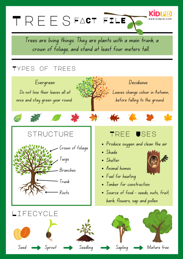 Tree Fact - Importance of Plants